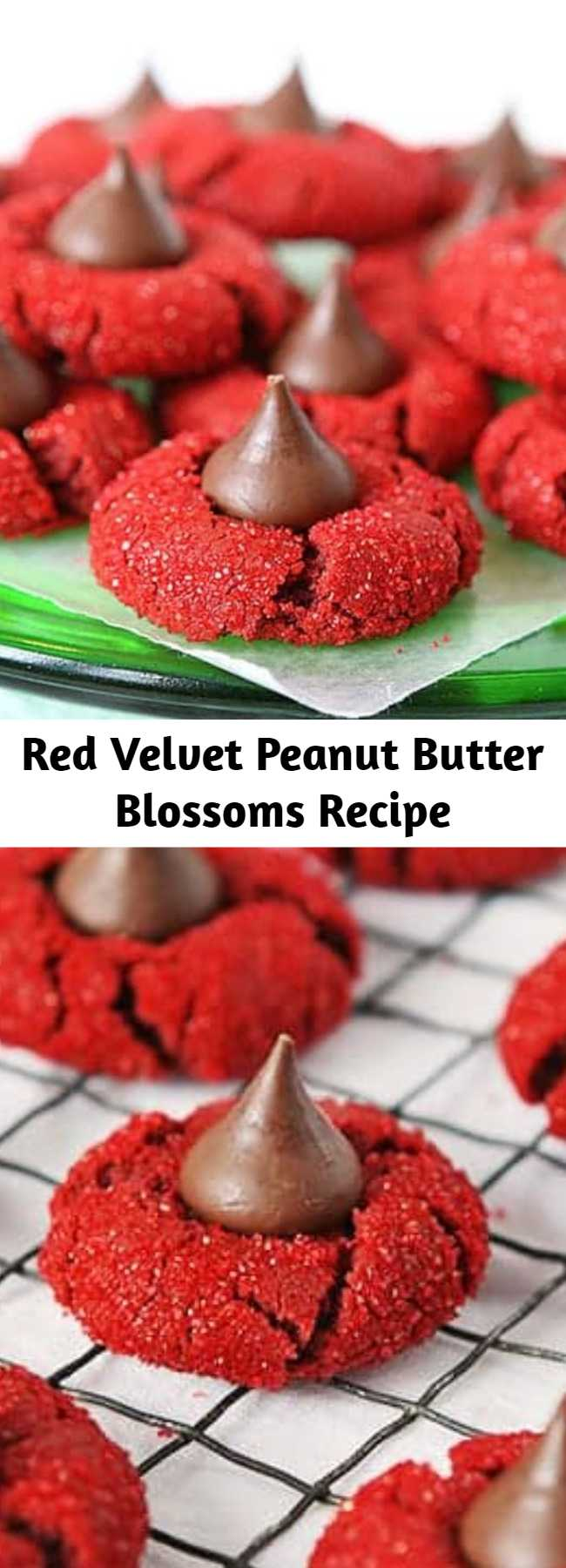 Red Velvet Peanut Butter Blossoms Recipe - This is a soft cookie that is crisp on the outside and chewy on the inside. These delicious cookies are so fun to share! #redvelvetpeanutbutterblossoms #redvelvetkisscookies #kisscookies #cookies #cookierecipes #baking #christmascookies #christmascookieexchange #cookieexchange